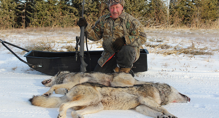 Hunter with two wolves down.